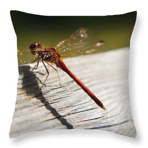 Dragonfly Throw Pillow featuring the photograph Dragonfly by Steve Somerville