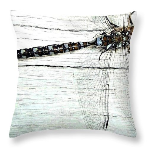 Insect Throw Pillow featuring the photograph Dragonfly by Will Borden