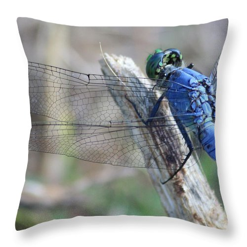 Dragonfly Throw Pillow featuring the photograph Dragonfly Wing Detail by Carol Groenen