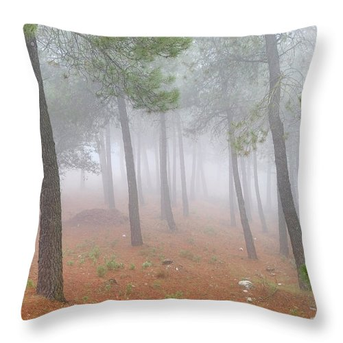 Fog Throw Pillow featuring the photograph Dream Forest II. Living In A Dream... by Guido Montanes Castillo