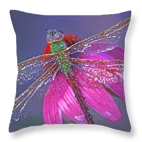 Dew Covered Dragonfly Rests On Purple Cone Flower Throw Pillow featuring the photograph Dreaming Dragon by Bill Morgenstern