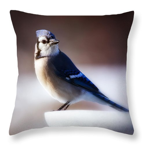 Bird Throw Pillow featuring the photograph Dreamy Blue Jay by Al Mueller