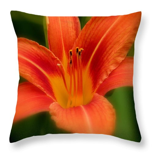 Diane Berry Throw Pillow featuring the photograph Dreamy Day Lily by Diane E Berry