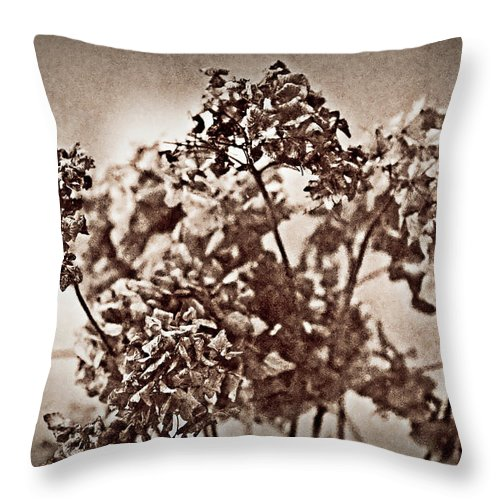 Dead Flower Throw Pillow featuring the photograph Dried Hydrangeas by Onyonet Photo Studios