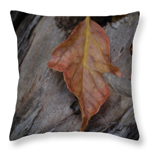 Fall Throw Pillow featuring the photograph Dried Leaf On Log by Heather Kirk