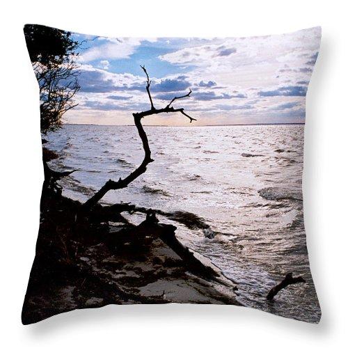 Barnegat Throw Pillow featuring the photograph Driftwood Dragon-barnegat Bay by Steve Karol