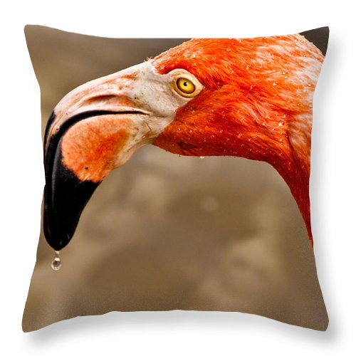 Flamingo Throw Pillow featuring the photograph Dripping Flamingo by Christopher Holmes