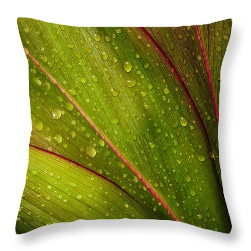 Abstract Throw Pillow featuring the photograph Droplets On Ti Leaves by Joe Carini - Printscapes