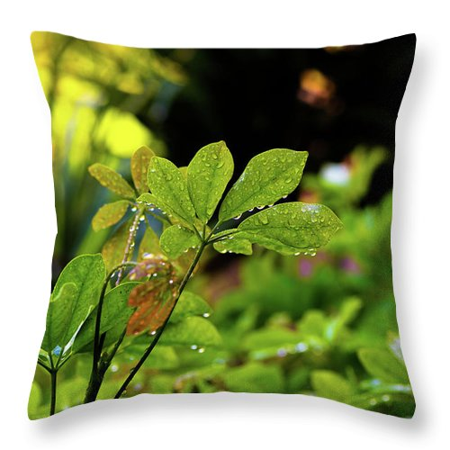 Hawaii Throw Pillow featuring the photograph Drops On Plants After Morning Rain by Joe Benning