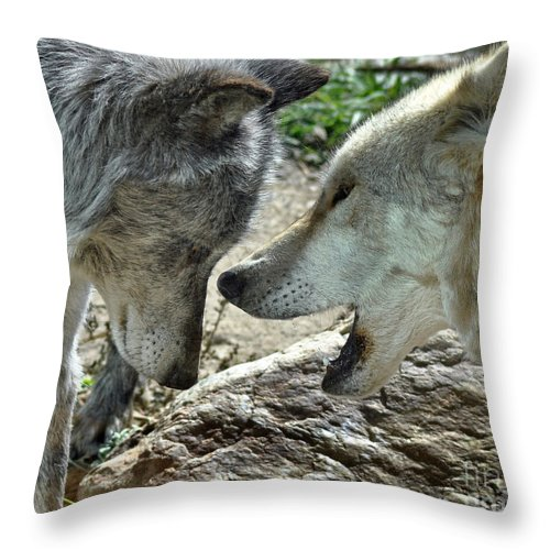 Diane Berry Throw Pillow featuring the photograph Druid Pack Yellowstone by Diane E Berry