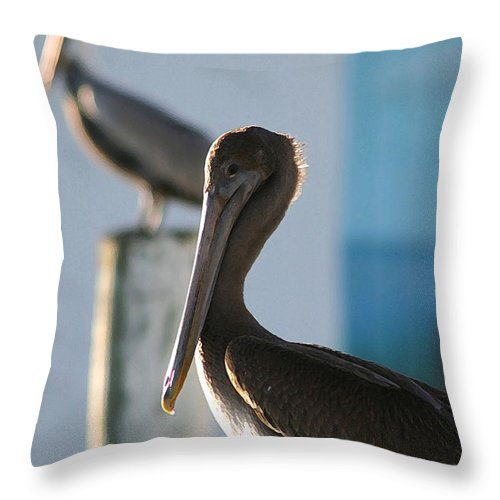 Pelican Throw Pillow featuring the photograph Dual Pelicans by Mary Haber