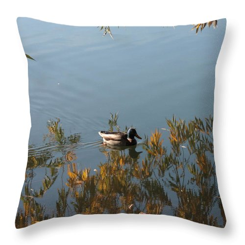 Autumn Throw Pillow featuring the photograph Duck On Golden Pond by Carol Groenen
