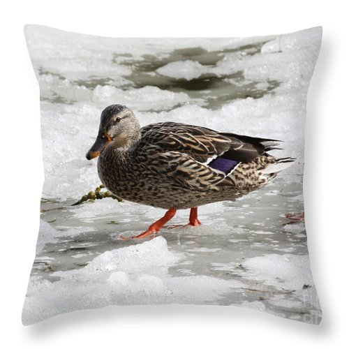 Duck Throw Pillow featuring the photograph Duck Walking On Thin Ice by Carol Groenen