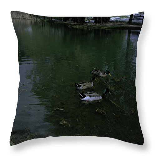 Rock Ledge Ranch Throw Pillow featuring the photograph Ducks In A Pond by Rachael Armstead