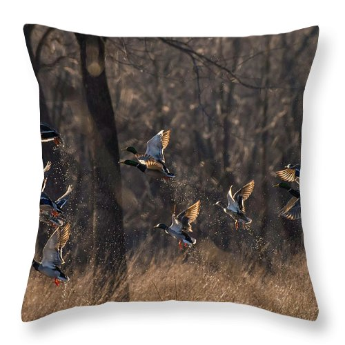 Ducks Throw Pillow featuring the photograph Ducks In Flight by Kevin Esterline