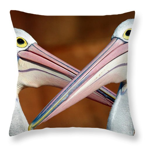 Duelling Pelicans Bird Australia Seabird Throw Pillow featuring the photograph Duelling Pelicans by Avalon Fine Art Photography
