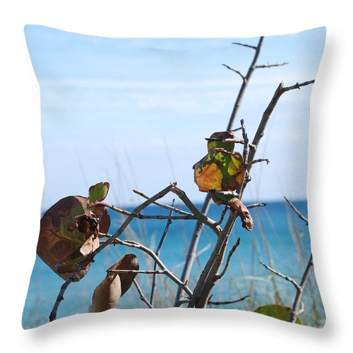 Ocean Throw Pillow featuring the photograph Dune Plants by Rob Hans