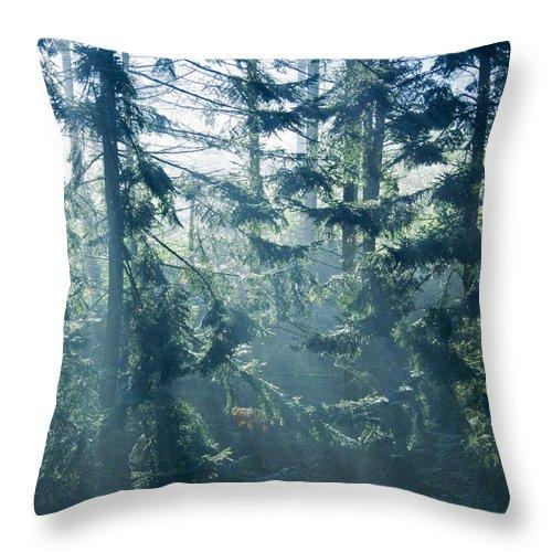 Magical Throw Pillow featuring the photograph Dusk In Ashenvale IIi by Daniel Csoka