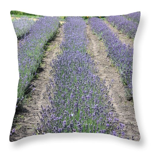 Lavender Throw Pillow featuring the photograph Dutch Lavender Field by Carol Groenen