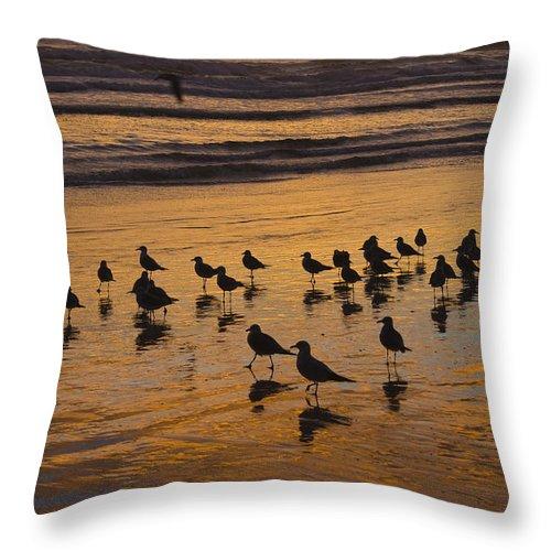 Beach Ocean Seagull Gull Bird Birds Sand Wave Waves Sun Sunrise Reflection Shaddow Sky Cloud Throw Pillow featuring the photograph Eager Anticipation by Andrei Shliakhau