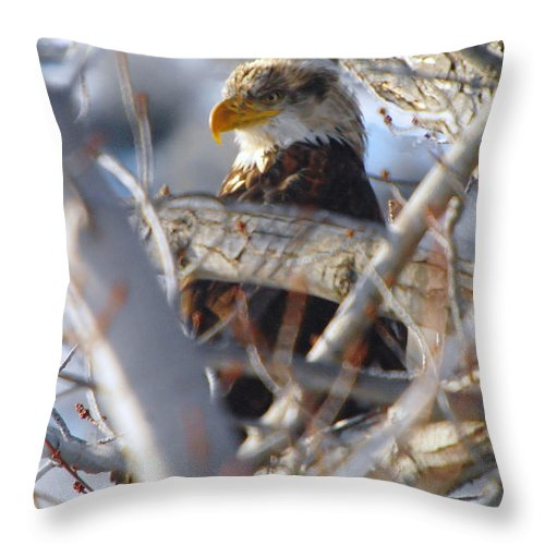 Eagles Throw Pillow featuring the photograph Eagle In A Tree by Jeff Swan