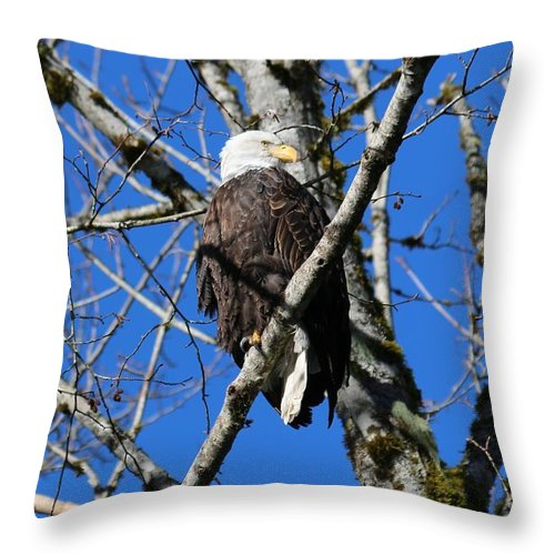 Nature Throw Pillow featuring the photograph Eagle by Lisa Spero