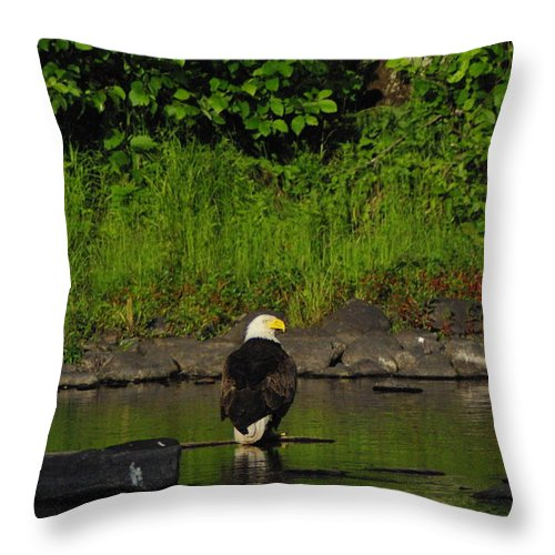 Eagle Throw Pillow featuring the photograph Eagle On River Rock II by Alice Markham