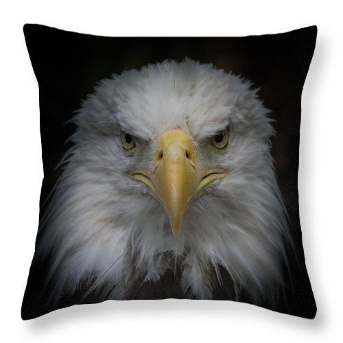 Bald Eagle Throw Pillow featuring the photograph Eagle Stare by Ernie Echols