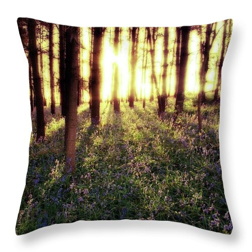 Sunrise Throw Pillow featuring the photograph Early Morning Amongst The by John Edwards