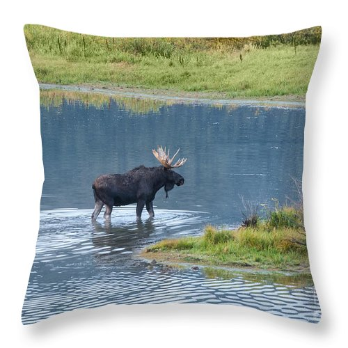 Grand Teton National Park Throw Pillow featuring the photograph Early Morning Crossing In Grand Teton by Sandra Bronstein