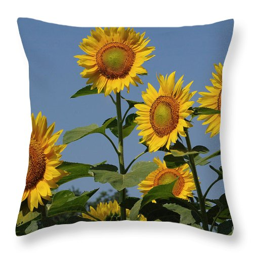 Sunflowers Throw Pillow featuring the photograph Early Morning Glow by Edward Sobuta
