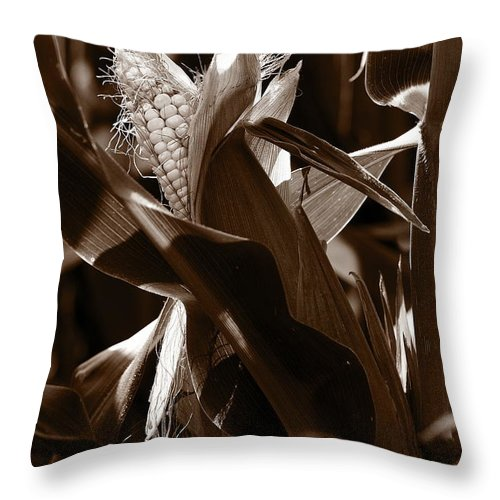 Farm Throw Pillow featuring the photograph Ears To You Corn - Sepia by Angela Rath