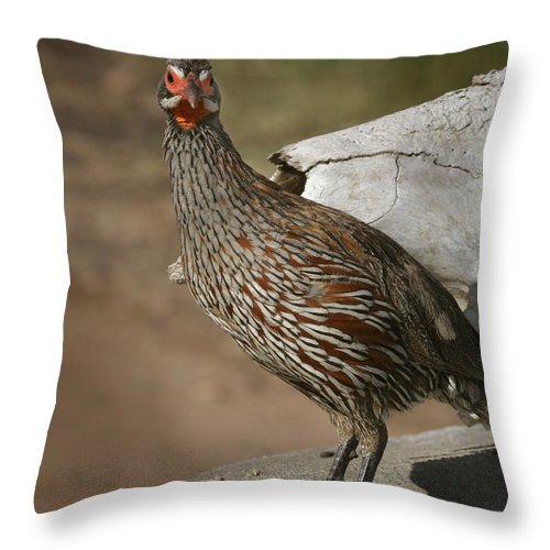 Spurfowl Throw Pillow featuring the photograph East African Spurfowl by Joseph G Holland