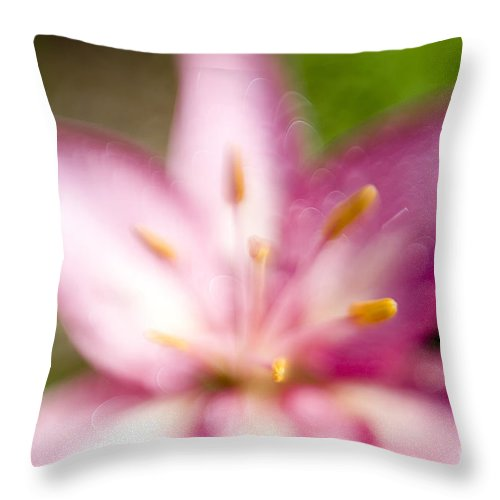 Pink Easter Lily Lilium Lily Flowers Flower Floral Bloom Blossom Blooming Garden Nature Plant Petals Plants Grow Species Garden One Single 1 Petals Close-up Close Up Cultivate Botanical Botany Nature Throw Pillow featuring the photograph Easter Lily 2 by Tony Cordoza