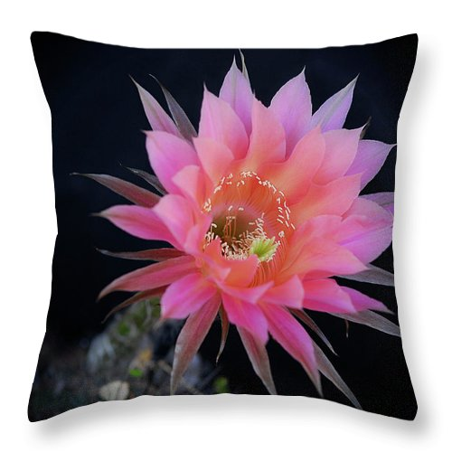 Easter Lily Cactus Throw Pillow featuring the photograph Easter Lily Cactus by Saija Lehtonen