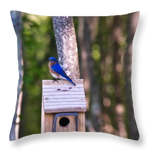 Sialia Throw Pillow featuring the photograph Eastern Bluebird Perched On Birdhouse 2 by Douglas Barnett