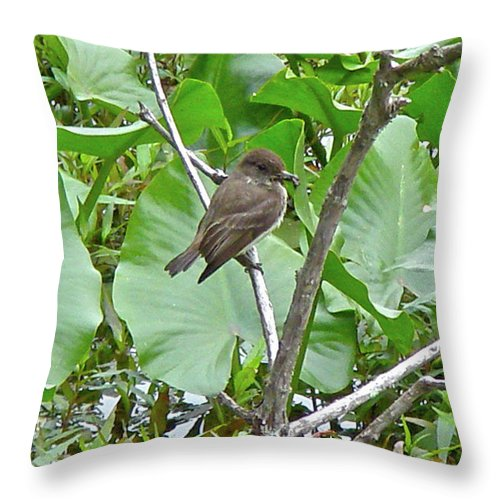 Phoebe Throw Pillow featuring the photograph Eastern Phoebe - Sayornis Phoebe by Mother Nature