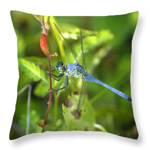 Dragonfly Throw Pillow featuring the photograph Eastern Pondhawk Dragonfly by Kenneth Albin