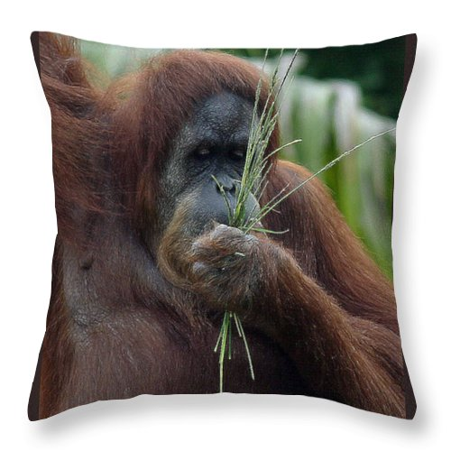 Orangatan Throw Pillow featuring the photograph Eat Your Veggies by Mary Haber