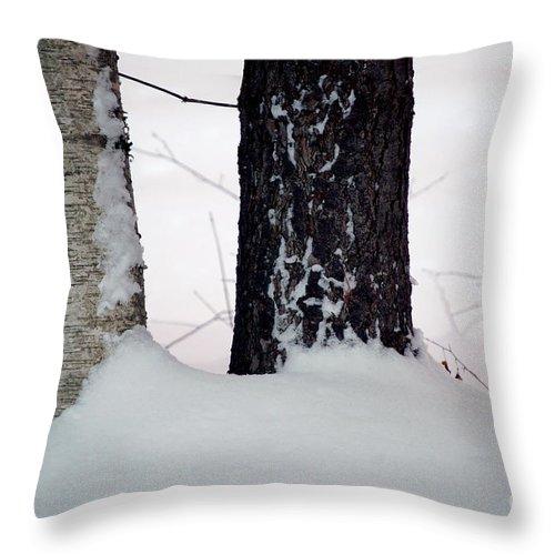 Tree Throw Pillow featuring the photograph Ebony And Ivory by Faith Harron Boudreau