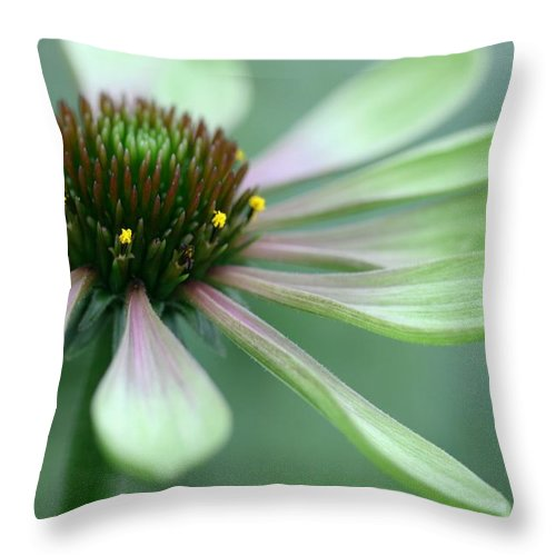 Betsy Lamere Throw Pillow featuring the photograph Echinacea - Green Envy by Betsy LaMere