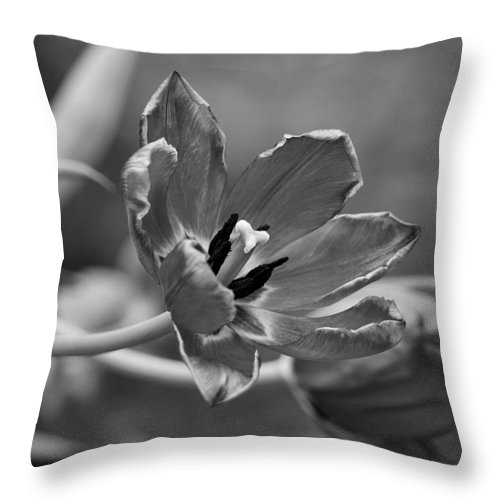 Richard Reeve Throw Pillow featuring the photograph Echoes Of Past Glory by Richard Reeve