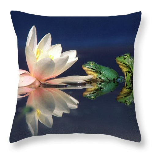 Fn Throw Pillow featuring the photograph Edible Frog Rana Esculenta Two Frogs by Wim Weenink