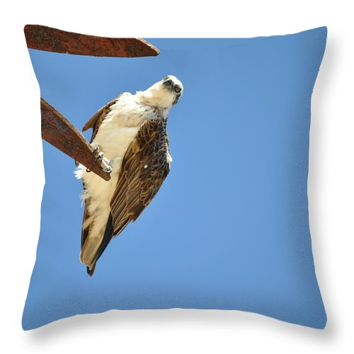 Eggle Throw Pillow featuring the painting Eggle by Richard Benson
