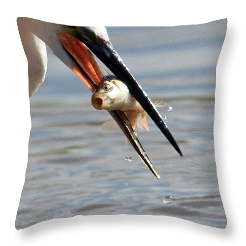 Egret Throw Pillow featuring the photograph Egret With Fish by Bob Kemp