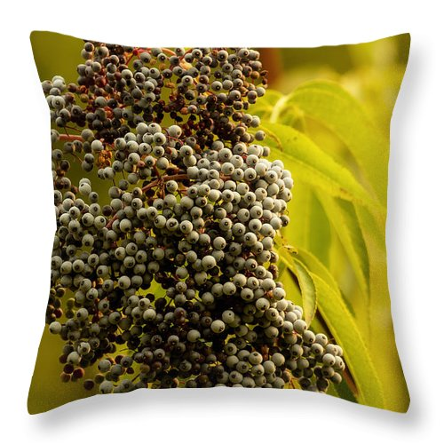 Elderberry Throw Pillow featuring the photograph Elderberry by Belinda Greb
