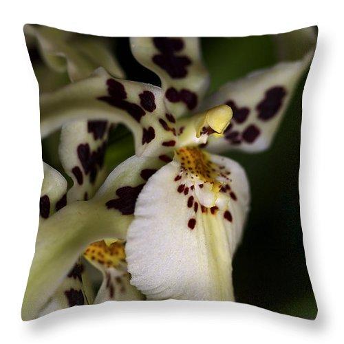 Flower Throw Pillow featuring the photograph Elegance by Deborah Benoit