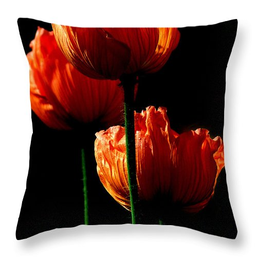 Photograph Throw Pillow featuring the photograph Elegance by Stephie Butler