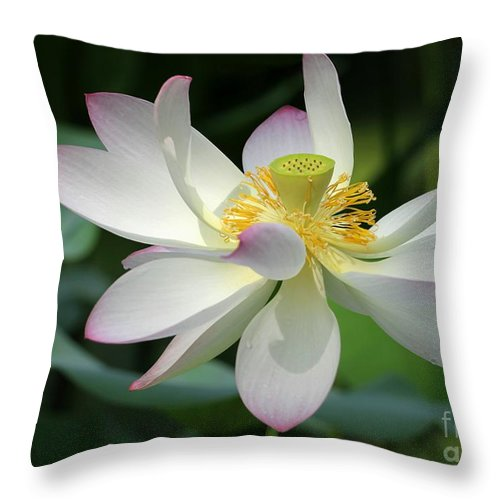 Lotus Throw Pillow featuring the photograph Elegant Lotus by Sabrina L Ryan