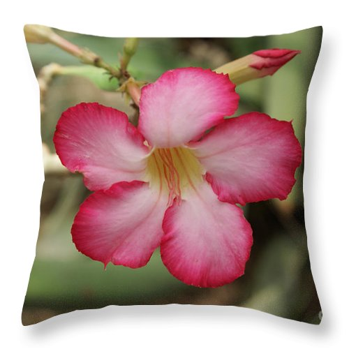 Floral Throw Pillow featuring the photograph Elegant by Shelley Jones